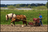 Sowing with Ardenner horse - Huseby Småland