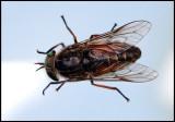 Horse-fly inside my camper