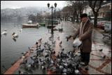 Feeding pigeons in the harbour of Kastoria