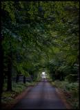 Oak alley on Visingsö - Lake Vättern