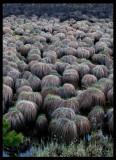 Trolls gathering?? Lappland - Sweden