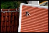 Roof guardian - Santa Cruz / Azores