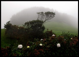 Foggy weather on central Sao Miguel