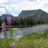 Trappers and Fireweed90X90.tif