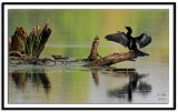 large_birds