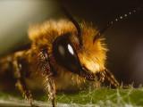 Bumble Bee (02).jpg