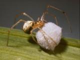 Spider(0004).jpg