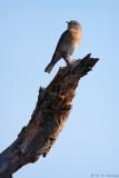 High perch