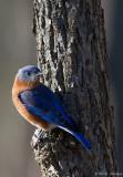 Small perch