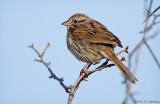 Treetop perch