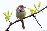 Sparrow, white sky
