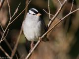 Sparrow in morning sun