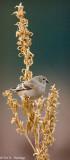 Fall perch
