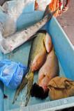 14 0933 Fish market
