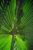 14 1169 Palm