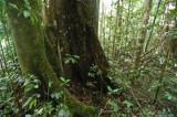 15 Along the jungle trail 0894