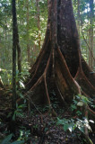 15 Dichotomous roots 0984