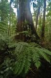 15 Tree, bromeliads, ferns 1022
