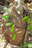 15 Aerial termites 2048