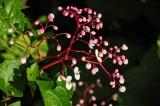 15 Roadside flowers 2354