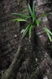 15 Bromeliad 2458