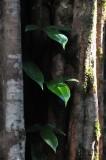 15 Peeking out 2473