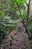 16 Trail to Middleham Falls 3057