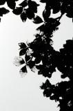 16 Katydid skeletonized canopy 3172