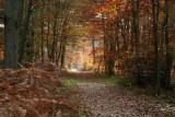 Forêt de Fontainebleau_3891r.jpg