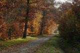 Forêt de Fontainebleau_3878r.jpg