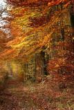 Forêt de Fontainebleau_3893r.jpg