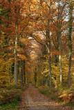 Forêt de Fontainebleau_3919r.jpg