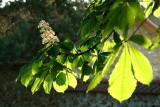 Floraison lumineuse_5111r.jpg