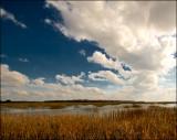 Marsh Grasses in Beaufort
