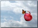 Flying Onion