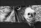 Donkey Fence.jpg