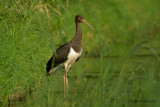 storks, spoonbills,flamingos and cranes.... ooievaars, lepelaars, flamingo's, kraanvogels