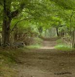 Path/Trail