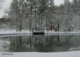 Pond with Three Mallards