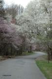 Entrance Drive in Spring