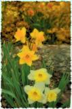 4/3/08 - Holland's Beauty