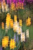 4/10/08 - Dancing Daffies