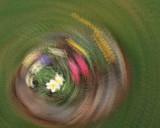 4/11/08 - Daffy Whirlpool