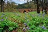 4/12/08 - Bluebells at the Stone Bridge