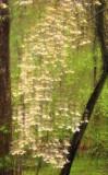 4/23/08 - Dogwood Cascade