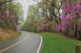4/23/08 - Spring on Skyline Drive
