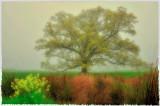 4/24/08 - Painterly Oak