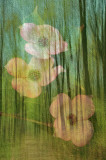 4/27/08 - Spring Montage