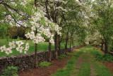 4/28/08 - Dogwood Lane