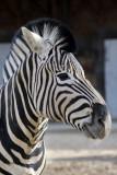 zoo_van_antwerpen